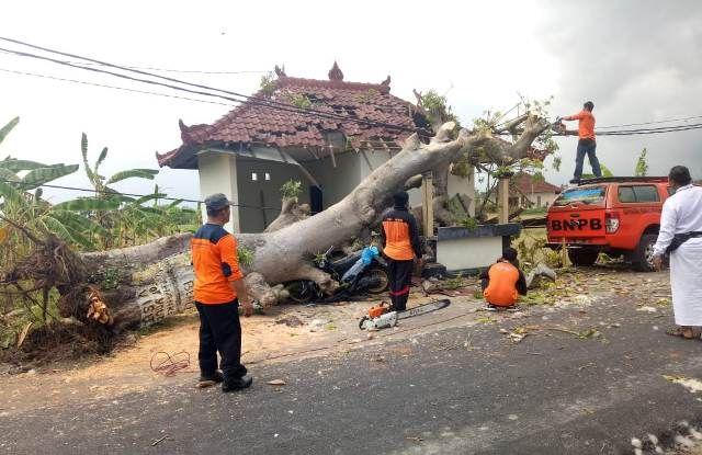 Pohon Randu Tumbang Timpa Pos Parkir Pantai Kedungu