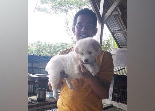 Bulu Anjing Kintamani Rontok di Hawa Panas, Cuma Mitos