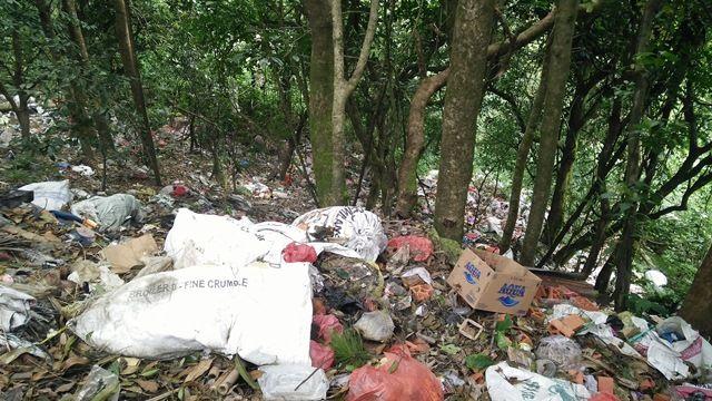 Hutan di Kintamani Jadi Tempat Pembuangan Sampah