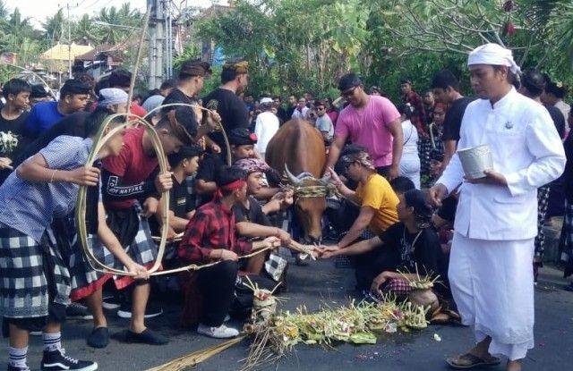 Tolak Bala, Desa Adat Besang Kawan Tohjiwa Gelar Tradisi Mejaga-jaga
