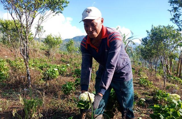 Bunga Pecah Seribu, Ceruk Ekonomi Warga Tamblingan