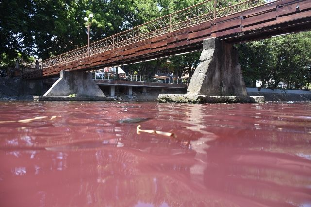 Air Tukad Badung Berwarna Merah akibat  Limbah Sablon Hj Nurhayati