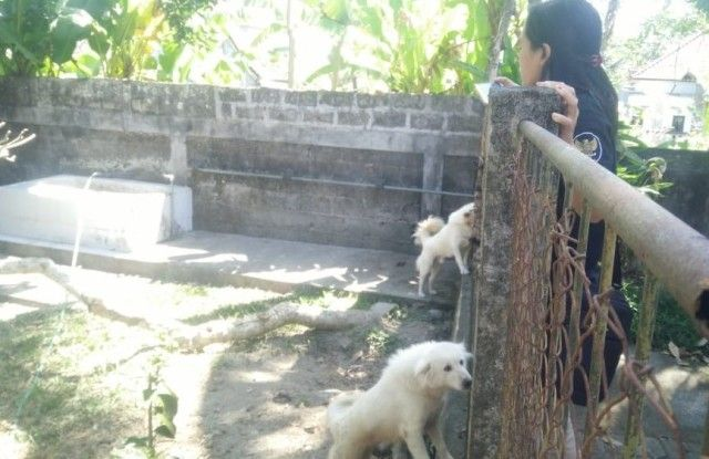 Dewan Usul Program Pemurnian Anjing Kintamani Diulang