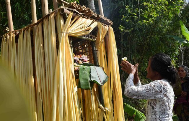 Mengenal Yos, Kawitan Lokal Masyarakan Desa Pedawa, Buleleng