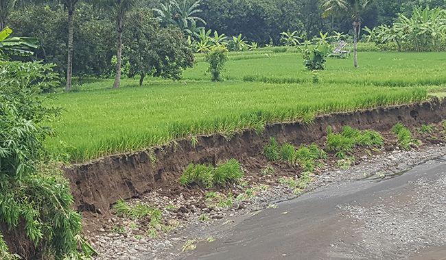 digerus banjir, belasan hektare sawah, berubah jadi sungai, desa banjarasem