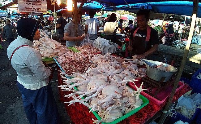 ayam potong, ayabroiler, peternak ayam, Peternak Bali, Dinas Peternakan Bali, Pinsar, Balai Karantina, peternak merugi milian,