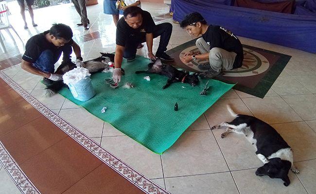 anjing rabies, Vaksin anti rabies, pemuda tewas, digigit anak anjing, wisata Tukad unda, RSUD Klungkung, dinkes bali