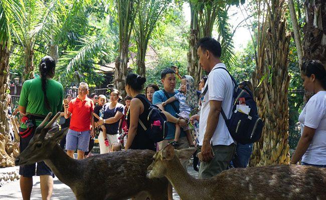 libur lebaran, wisatawan domestik, kebun binatang, bali zoo
