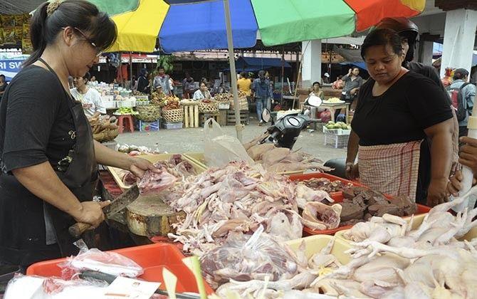 over produksi, pasokan daging, daging ayam, pinsar bali, disnak bali