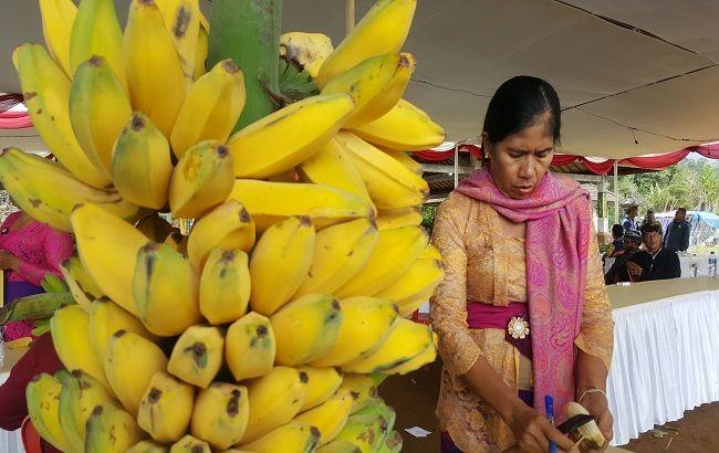 twin lake festival, adu kemolekan, pisang lokal, pisang kepok