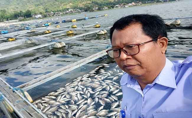 fenomena alam, belerang menyembur, danau batur, ribuan ikan mabuk, dinas pkp bangli