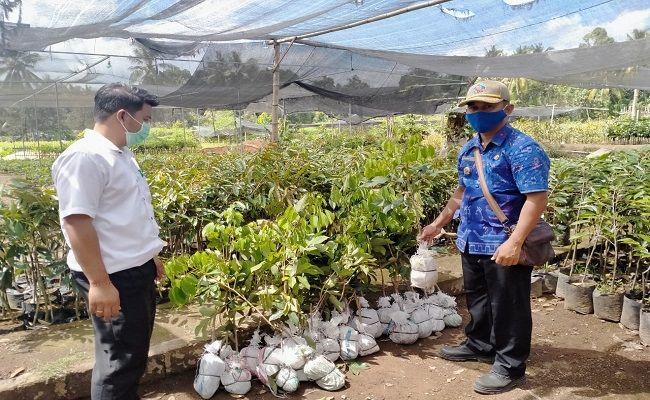 perbekel sudaji, ajari warga, bibit tanaman, lahan pertanian, lokasi pembibitan
