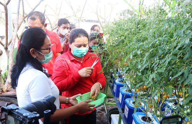 program hatinya pkk, ny seniasih, panen urban farming, tanaman urban farming, kuta, pemkab badung