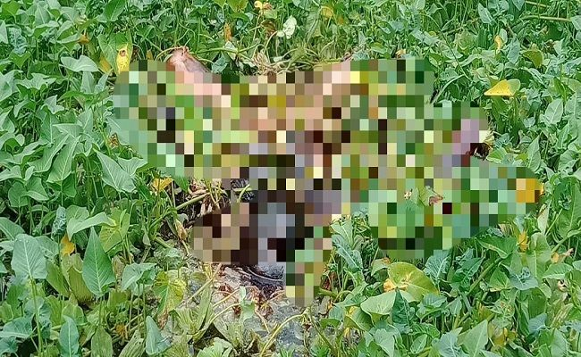 temuan mayat, mayat pria membusuk, mayat dikebun kangkung,Polresta Denpasar, geger mayat, korban pembunuhan,