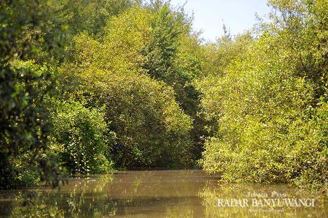 PETUALANGAN: Wisatawan bisa menyusuri sungai di tengah hutan mangrove di Pantai Cemara Kelurahan Pakis, Kecamatan Banyuwangi.