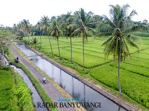 SEJUK: Rute jalan goweser diapit aliran sungai dan saluran dari Dam Gembleng dan persawahan nan hijau di Desa Aliyan, Kecamatan Rogojampi, Banyuwangi.