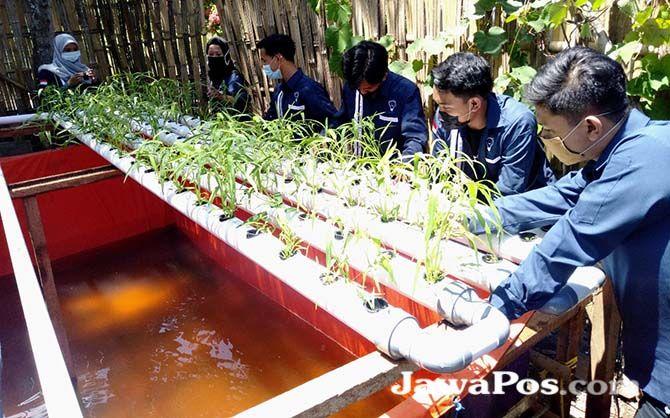 PEMBERDAYAAN: Para mahasiswa Politeknik Negeri Banyuwangi (Poliwangi) membuat kolam ikan nila yang di atasnya terdapat akuaponik, Minggu (6/9)