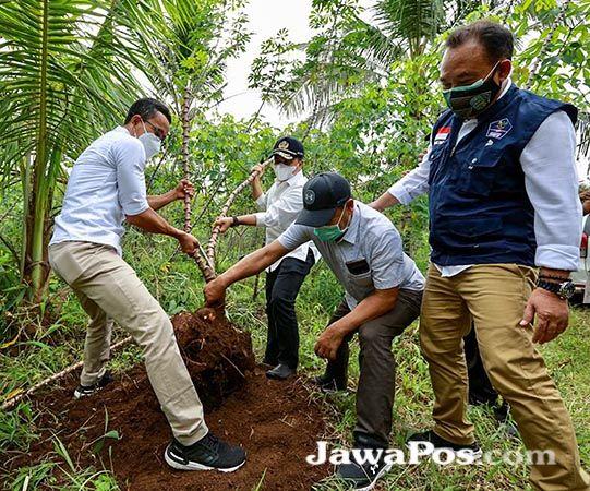 PASOK PASAR BALI: Bupati Anas, Sekkab Mujiono, Asosek Guntur Priambodo, dan Kadis Pertanian Arief Setiawan memanen singkong di Karangsari, Sempu.