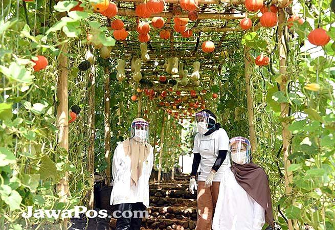GERAKKAN EKONOMI DESA: Agrowisata Tamansuruh dikonsep sebagai tempat edukasi pertanian. Mengingat semua tanaman di lahan ini ditanam dari bibit hingga tumbuh besar dan berbuah.