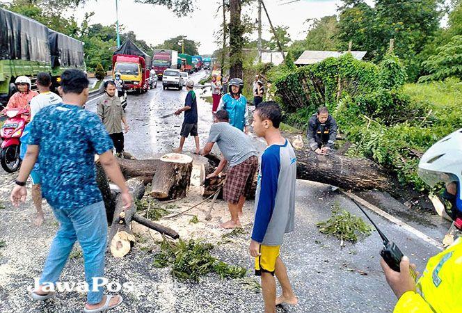 EVAKUASI: TRC BPBD Banyuwangi bersama warga mengevakuasi pohon tumbang di Jalan Brawijaya kemarin (21/2).