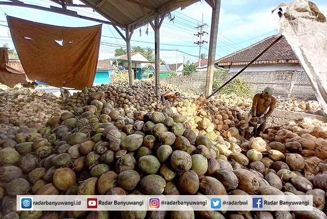 SUMBAT: Buruh mengupas serabut kelapa di gudang milik Nanang Dwi Cahyono, di Desa Kesilir, Kecamatan Siliragung sebelum dikirim ke pasar, kemarin (30/4)