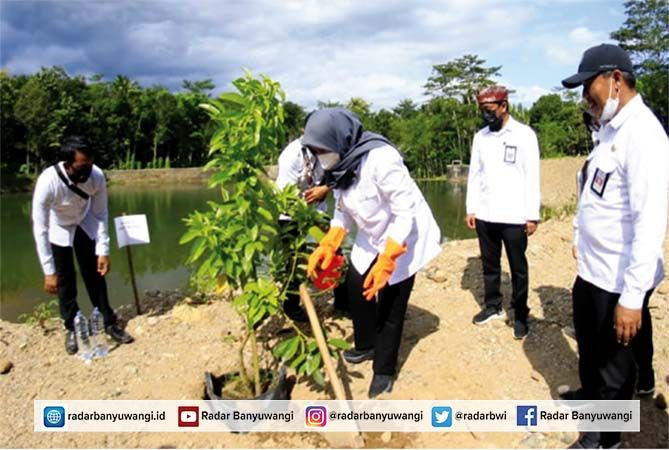 KONSERVASI: Bupati Ipuk Fiestiandani menanam tumbuhan di sekitar kawasan embung Kawat, Desa Sarongan, Kecamatan Pesanggaran, Banyuwangi.