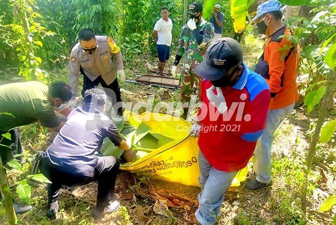 DIEVAKUASI: Petugas mengevakuasi jasad Mr X yang membusuk di tengah kebun Desa Sumberberas, Kecamatan Muncar, kemarin (8/6).