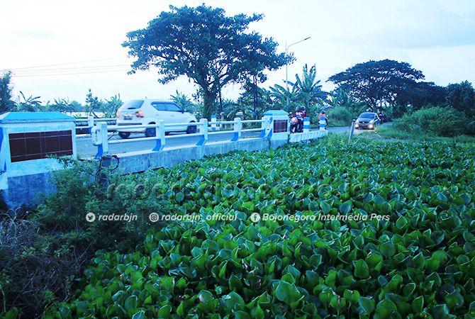 SULIT DITANGANI: Eceng gondok yang tumbuh subur di kali wilayah Bengawan Jero.