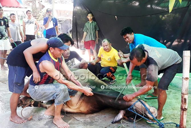 SAPI KEDELAPAN: Ketua Panitia Idul Adha Masjid Taqwa Mojokampung Nur Farid Muttaqin saat menyembelih sapi kedelapan dari 21 sapi dan 17 kambing kurban, Ahad (11/8).