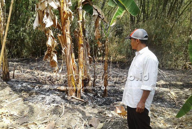LOKASI KEJADIAN: Abu sisa pembakaran daun kering yang akhirnya membakar tubuh Misih, 80, warga Desa Jatipayak, Kecamatan Modo.