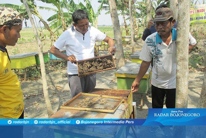 SERING PINDAH:  Peternakan lebih madu di Desa Sidobandung, Kecamatan Balen yang baru sepuluh hari berada di desa setempat.