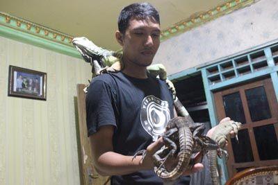 HEWAN PELIHARAAN: Imam Khawarom dan iguana yang diternaknya.
