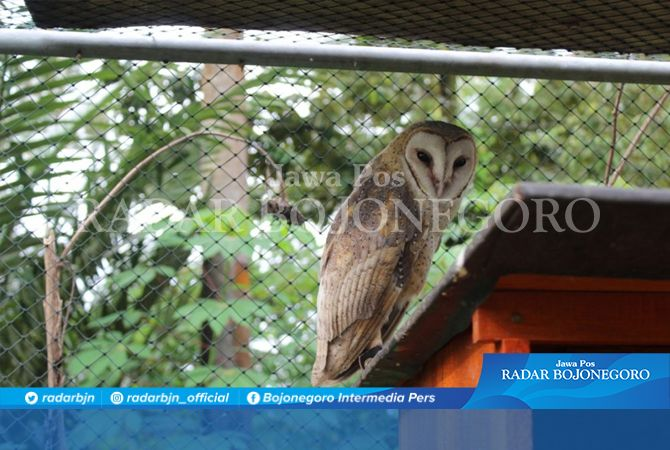 Rencana Hibah Rumah Burung Hantu Gagal Dilaksanakan
