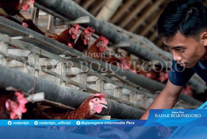 HARGA NAIK: Peternak di Desa Simbatan, Kecamatan Kanor, waswas dengan musim tak menentu. Namun, harga jual telur di pasaran naik, semula kisaran Rp 18 ribu menjadi Rp 23 ribu per kilogram.