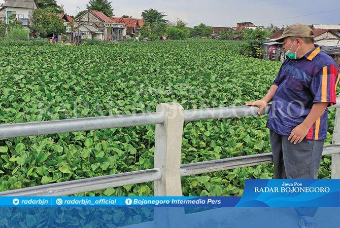 GANGGU ALIRAN AIR: Eceng gondok yang tumbuh subur di sungai sekitar Jembatan Kiringan, Desa Kemlagilor kemarin.