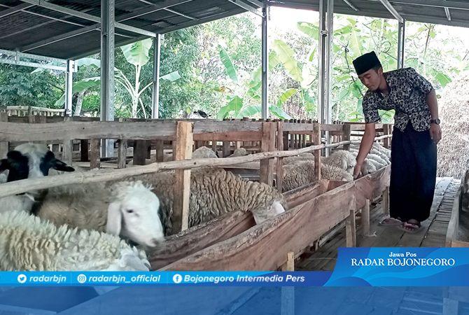 PETERNAK MUDA: As'ari memantau ternak dombanya di Desa Ngumpakdalem. Pemkab diminta serius kembangkan sektor peternakan.