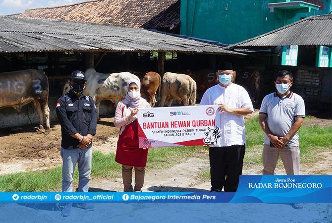 Penyerahan bantuan hewan kurban sebanyak 7 ekor sapi ke Rumah Potong Hewan Ruminansia (RPH-R) Kecamatan Bancar.