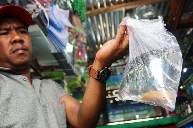 Salah satu penjual di Pasar Citra Niaga (PCN) Jombang menunjukkan jenis ikan yang ramai diburu pembeli