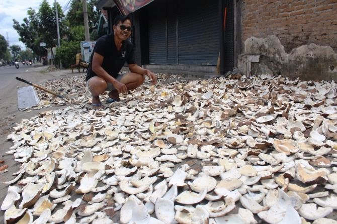 Badi, 60, saat mengeringkan kelapa di pinggir jalan raya Dusun/Desa Ceweng.