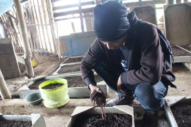 Usaha cacing fosfor yang berada di Dusun Kepuhrejo, Desa Sukopinggir, Kecamatan Gudo.
