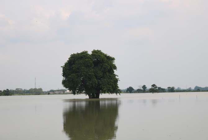 MASIH TERGENANG: Hektarean sawah milik warga Dusun Beluk, Desa Jombok, Kesamben masih tergenang banjir beberapa waktu yang lalu. Hingga kemarin masih terendam banjir.