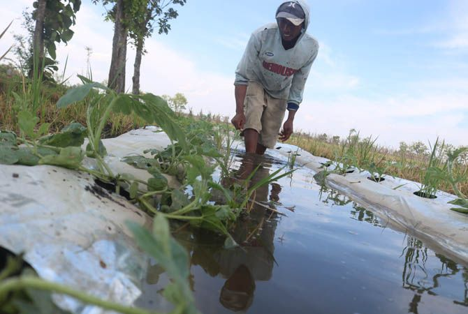 RUSAK: Hujan lebat merendam tanaman buah semangka petani di Bandarkedungmulyo (15/9).