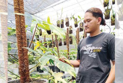 BIKIN WOW!: Iqbal Akbar melihat tiga tanaman yang dia akui diperoleh melalui barter dengan mobil Toyota Avanza seharga Rp 105 juta!