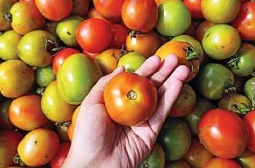 Pasokan Seret, Harga Tomat Terkerek