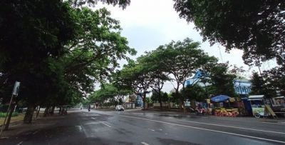 RINDANG :Pepohonan di kawasan jadi tempat berteduh PKL. Di musim pancaroba yang disertai hujan deras dan angin rawan membuat pepohonan lebat tumbang.