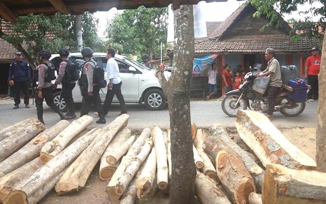 DIANGKUT: Kayu hasil dari curian di Desa Ronggo, Jaken, diangkut petugas gabungan kedalam truk Rabu (24/10) lalu.