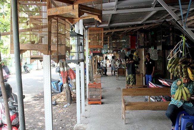 BELUM PINDAH: Para pedagang burung masih berjualan di Pasar Burung dekat GOR simpang lima Purwodadi. Mereka masih menunggu kepastian relokasi ke Pasar Unggas di Nglejok.