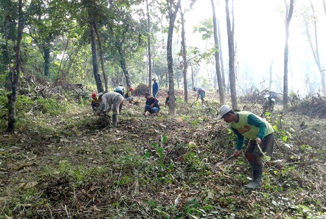 BUKA LAHAN: Petugas dari Perhutani Gundih membuka lahan baru untuk wisata di Waduk Kedungombo di lahan seluas 9,8 hektare.