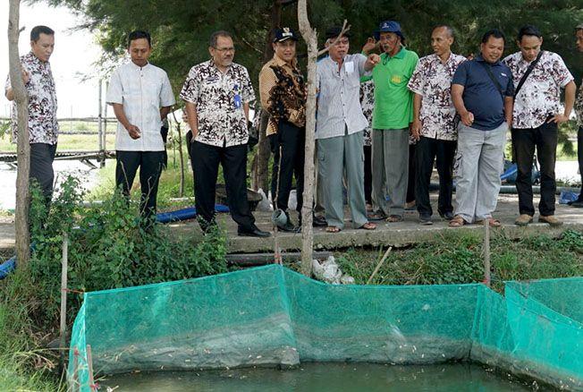 CEK TAMBAK: Wakil Bupati Saiful Arifin bersama rombongan melihat lokasi budidaya ikan nila salin di Desa Dororejo, Tayu, kamis (13/6) lalu.