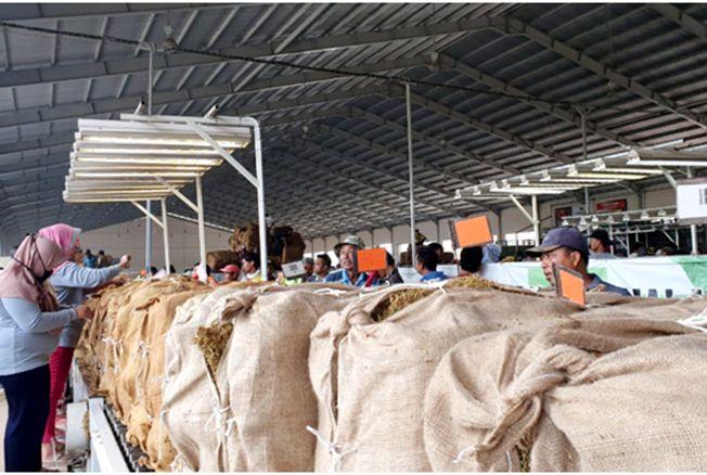 CEK KUALITAS: Tim pengcek kualitas tembakau melihat hasil panen Rembang yang ditampung gudang PT Sadhana di Jalan Rembang-Blora. Per ha petani berhasil menerima Rp 50 juta.